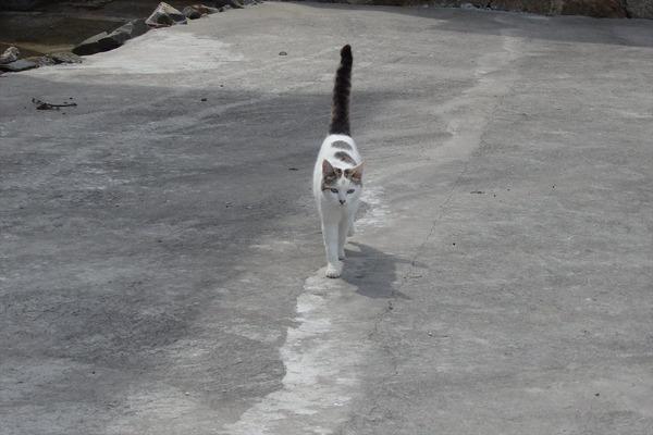 佐柳島、猫 (63)