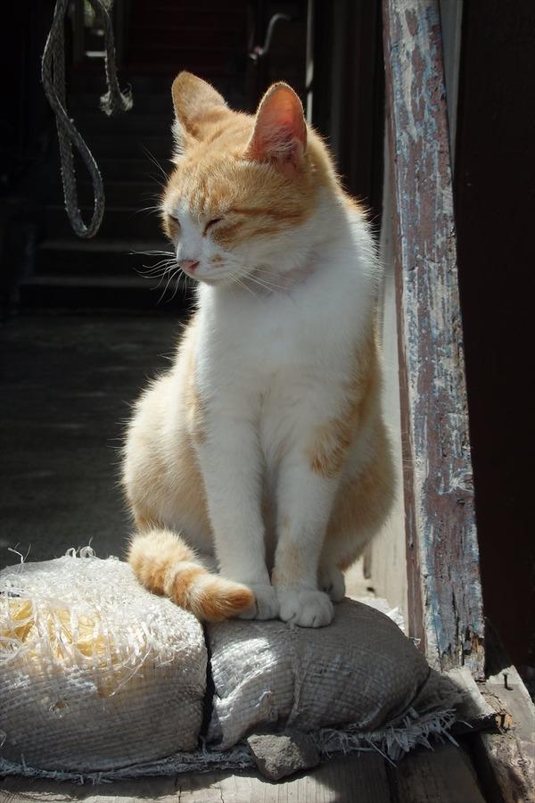 佐柳島、猫 (46)