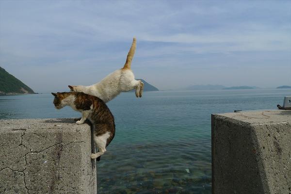佐柳島、猫 (11)