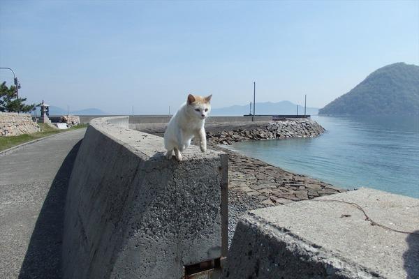 佐柳島、猫 (18)