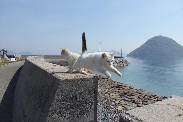 佐柳島、猫 (17)