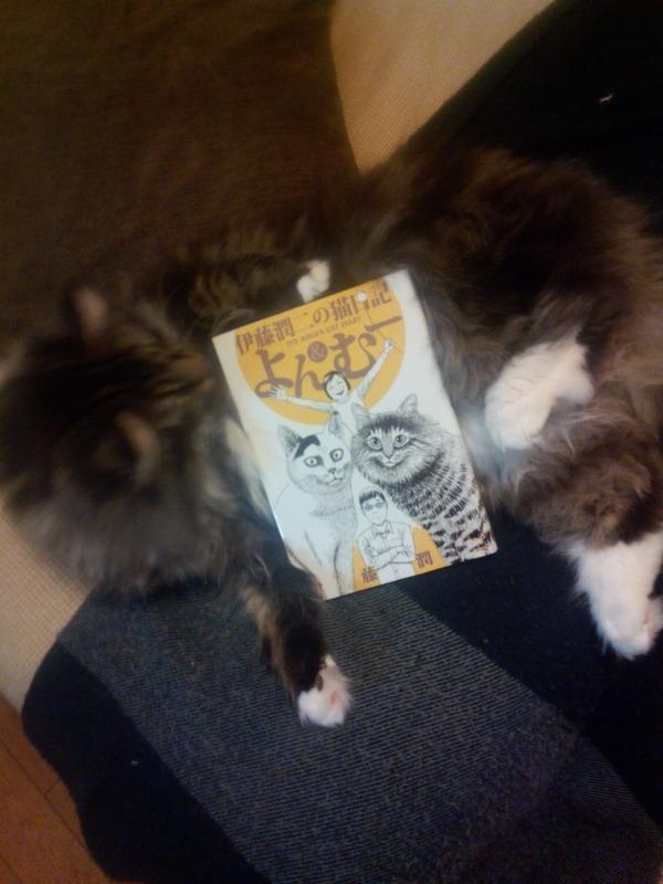 ネコ (4)