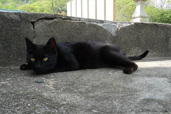 佐柳島、猫 (60)