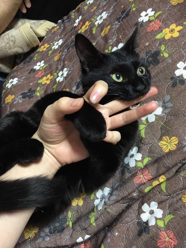 猫 (77)