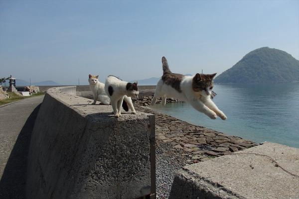 佐柳島、猫 (16)