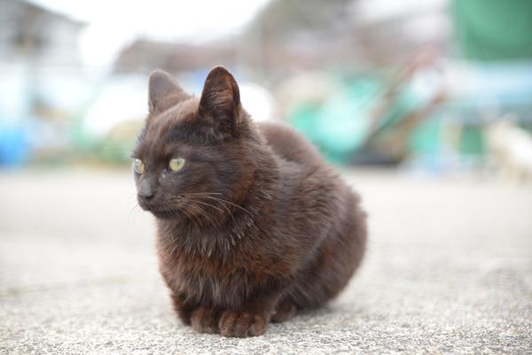 猫 (37)