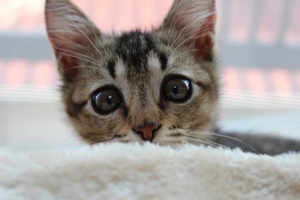 猫 (7)