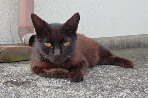 佐柳島、猫 (49)