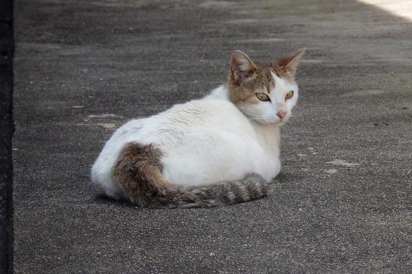 佐柳島、猫 (42)