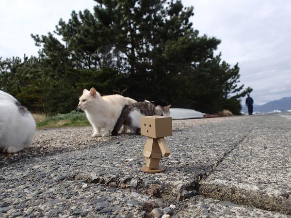 猫、ダンボー2