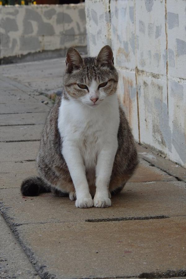 佐柳島、猫 (71)