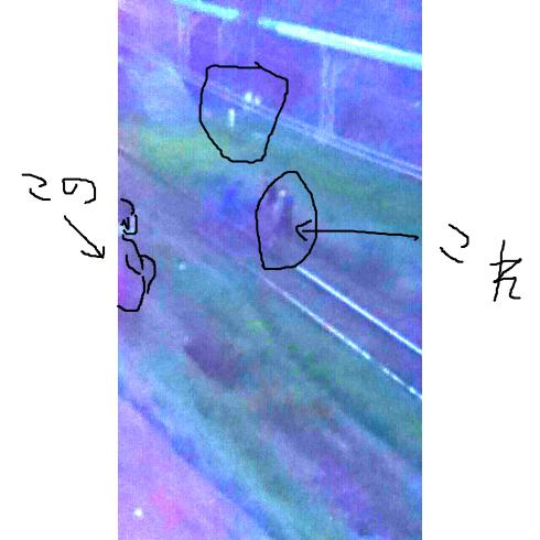 写真 (4)