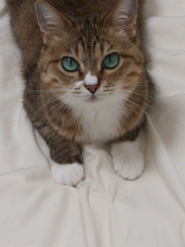 ネコ (14)