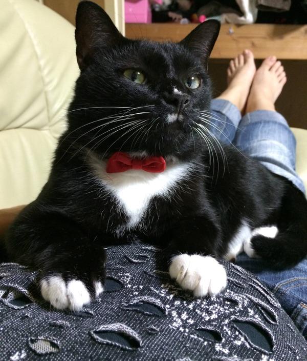 猫 (12)