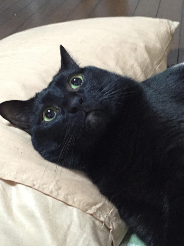 猫 (72)