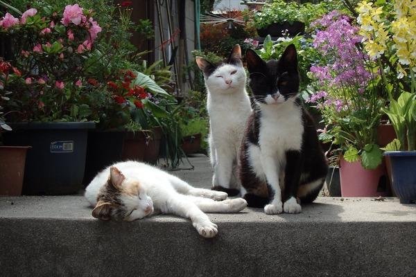 佐柳島、猫 (72)