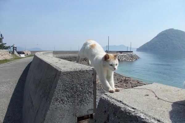 佐柳島、猫 (21)