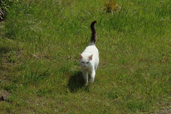 佐柳島、猫 (4)