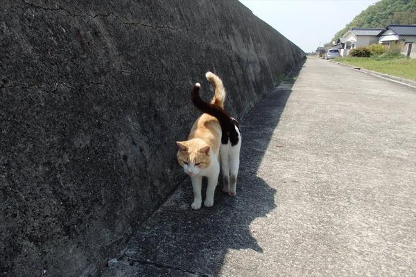 佐柳島、猫 (76)