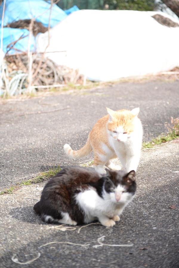 猫 (19)