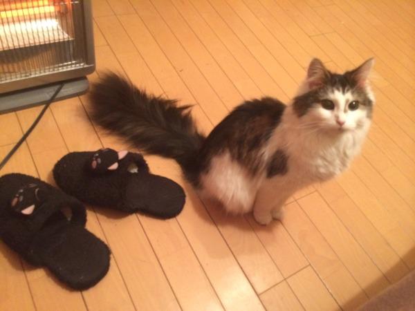 猫 (9)