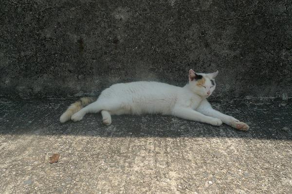 佐柳島、猫 (32)