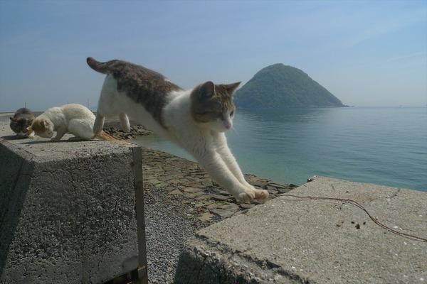 佐柳島、猫 (8)