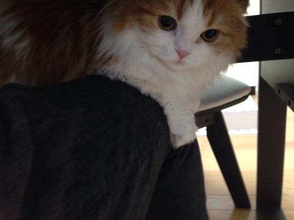 猫 (14)