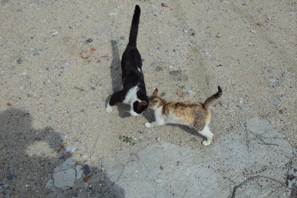 佐柳島、猫 (74)