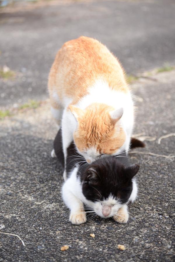 猫 (15)