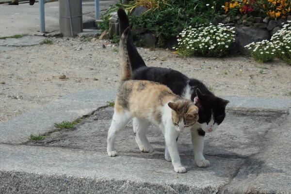 佐柳島、猫 (75)