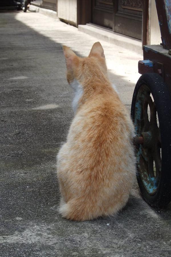 佐柳島、猫 (43)