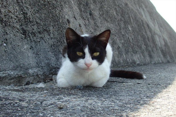 佐柳島、猫 (5)