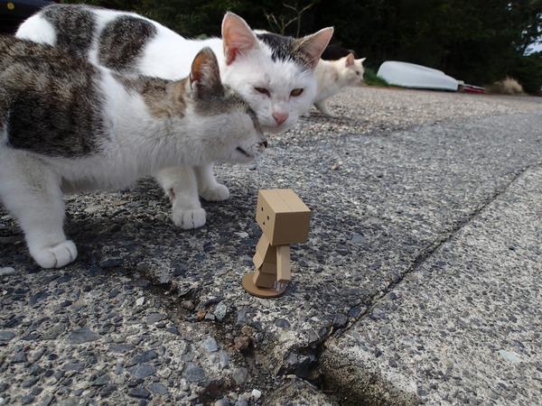 猫、ダンボー3