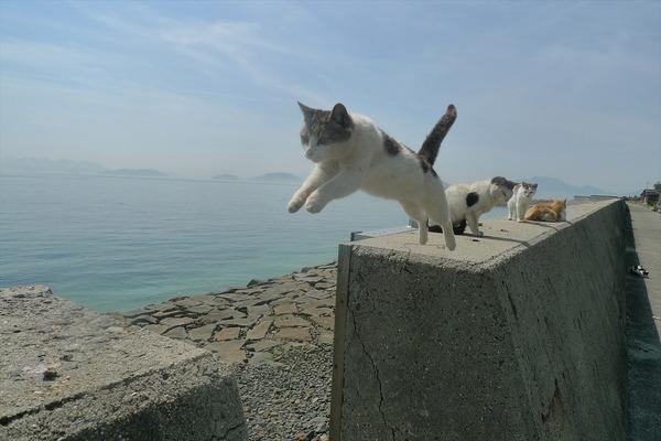 佐柳島、猫 (7)