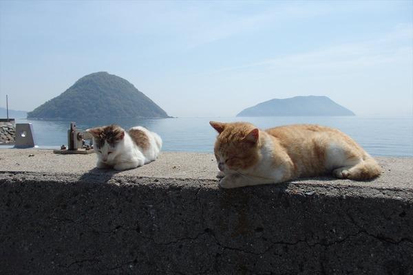 佐柳島、猫 (26)