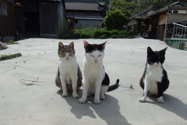 佐柳島、猫 (73)