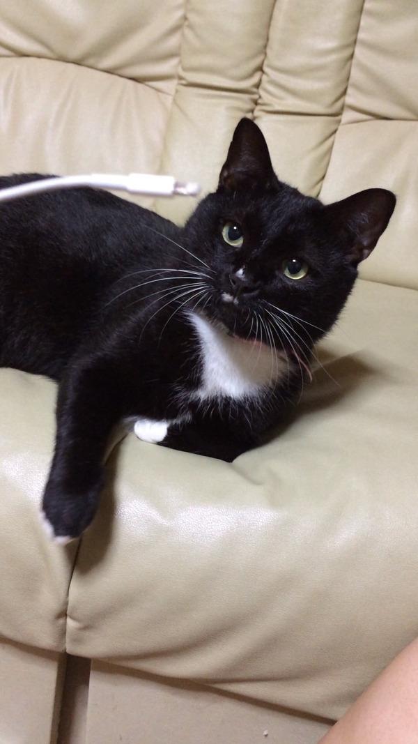 猫 (26)