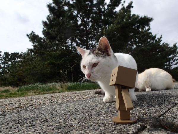 猫、ダンボー4