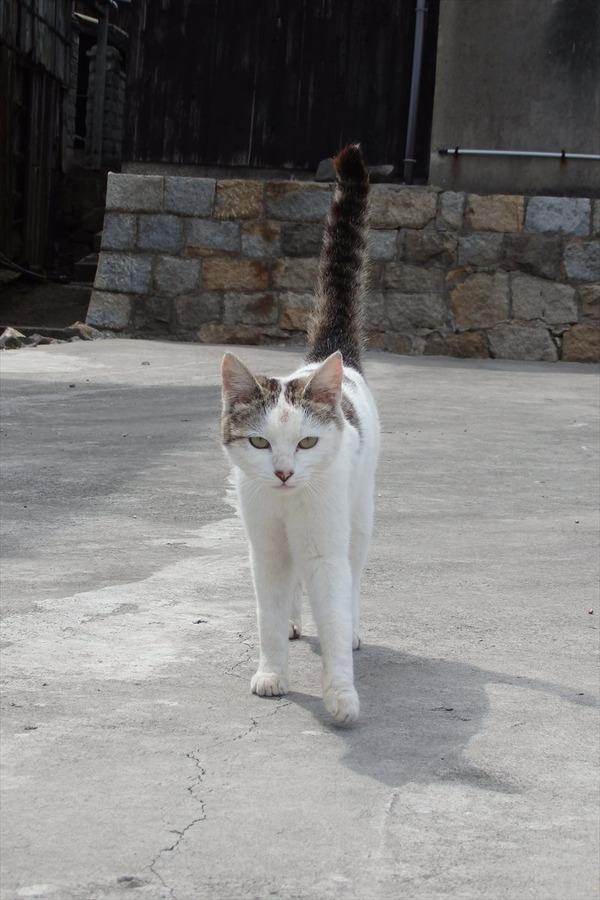佐柳島、猫 (64)