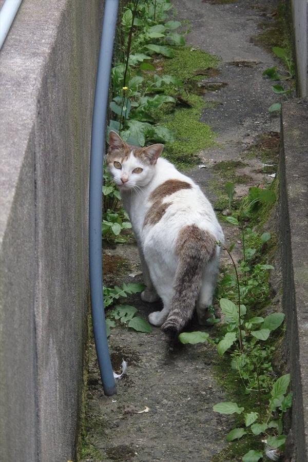 佐柳島、猫 (54)