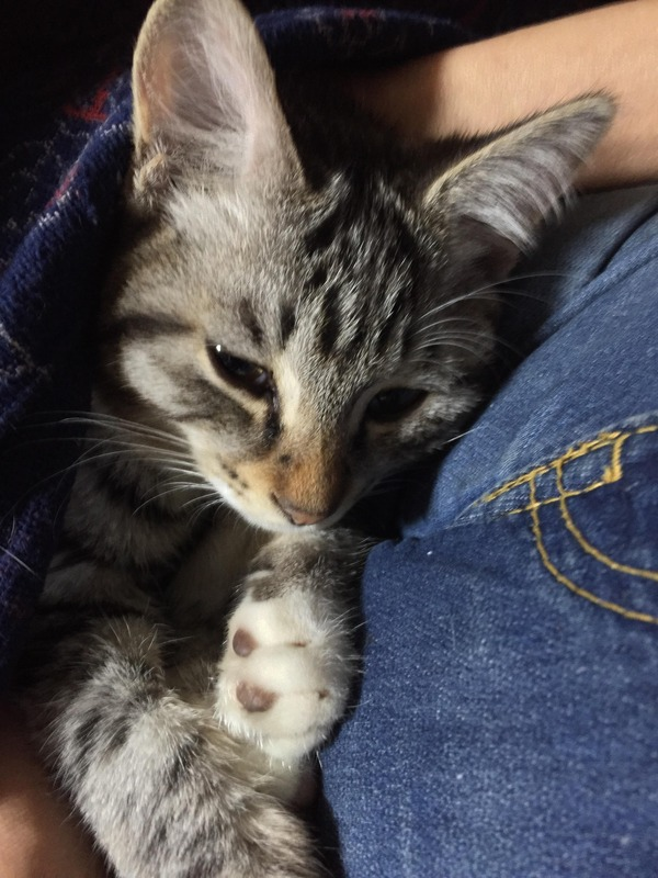 猫 (18)