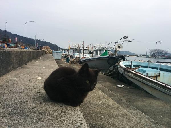 沖島、猫6