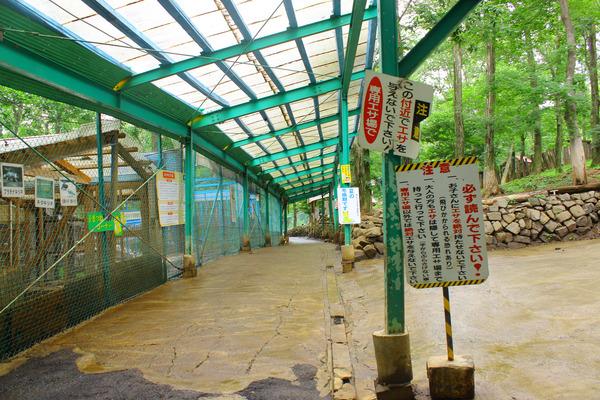 キツネ村 (4)