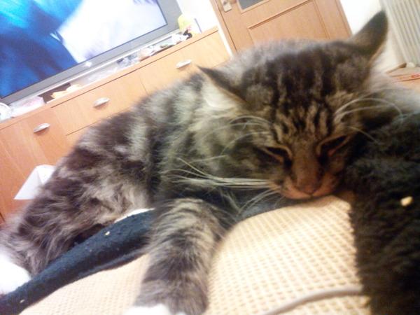 ネコ (11)