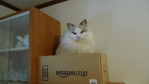 猫 (41)