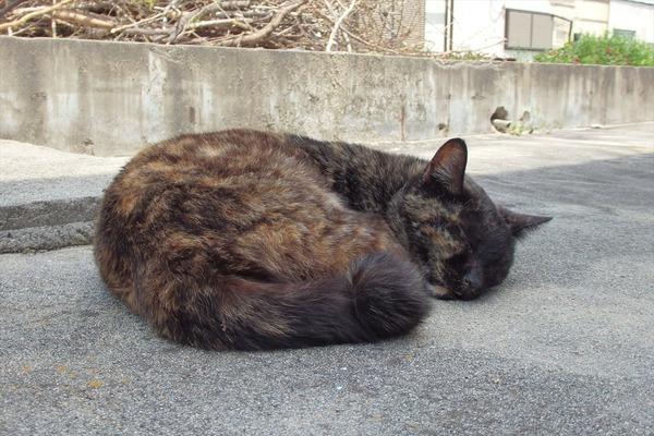 佐柳島、猫 (34)
