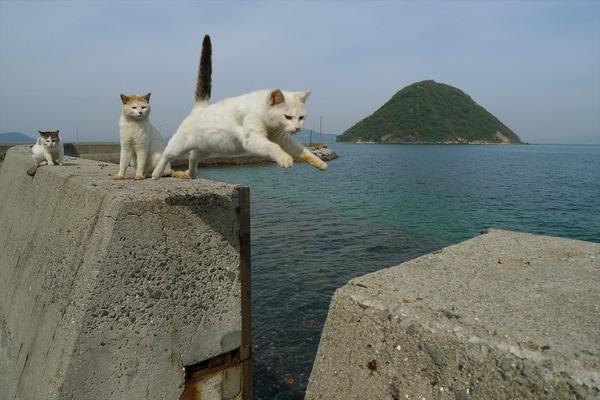 佐柳島、猫 (15)