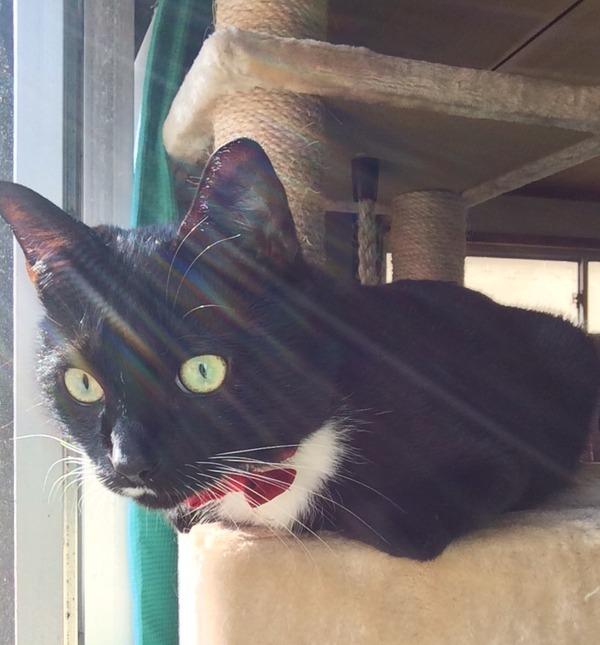 猫 (1)