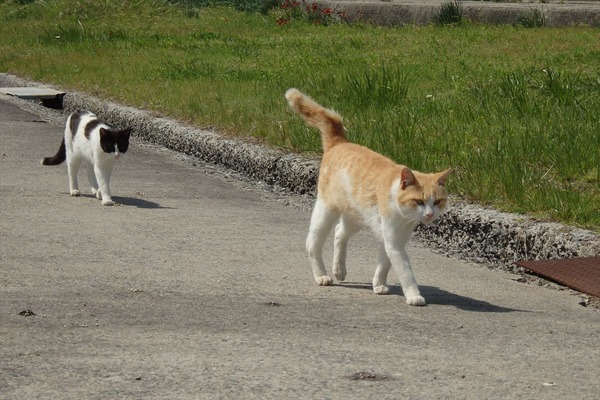 佐柳島、猫 (6)